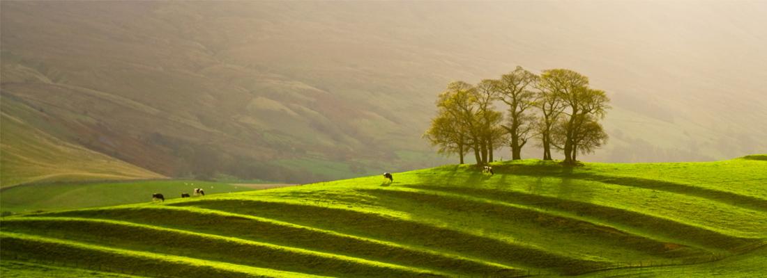 Cultivation terraces, Eden Valley