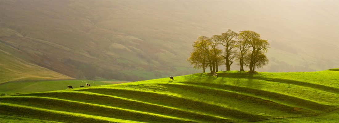 Cultivation terraces, Eden Valley